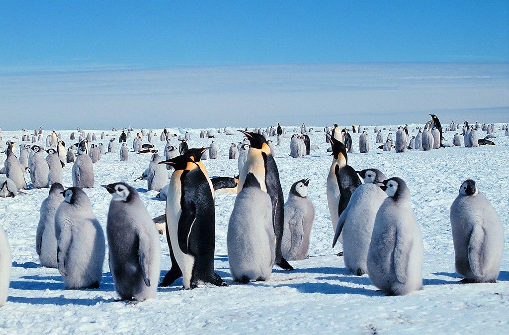 Pinguins não sabem voar